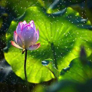 lotus2image-1